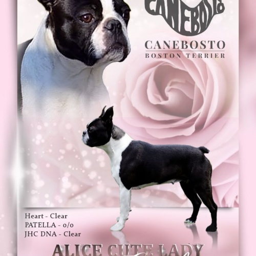 ALICE CUTE LADY Canebosto